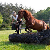 Horses Teach Us To Hear What Is Not Said..