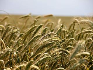 Inicios de la Agricultura de Precisión