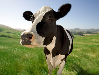 Tracking de Vacas