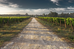EMBRAPA: al servicio de la Agro Industria de Brasil