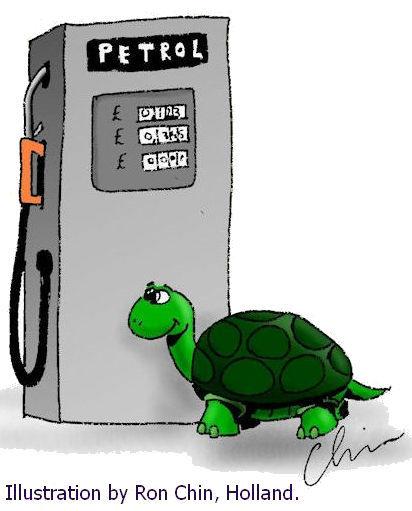 Myrtle the Turtle - wix.jpg