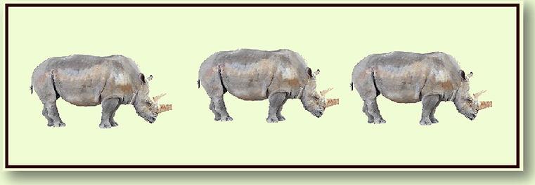 What Rhymes with Rhinoceros .jpg