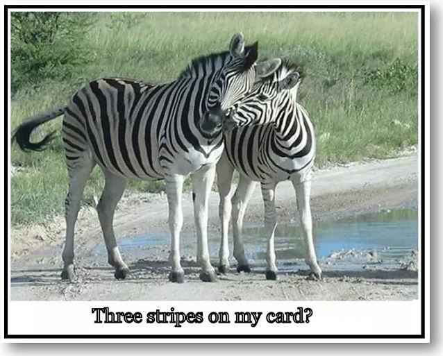 Zebra Who Knew Best (The) .jpg