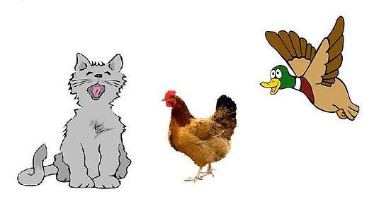 Cat hen etc.jpg