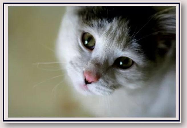 Kitty Tricks - Heading.jpg