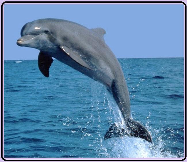 The Dolphin - Heading .jpg
