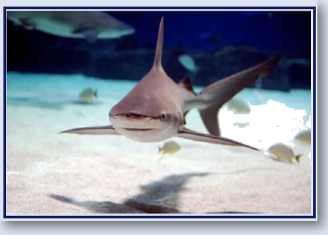 Shark Sense - Heading .jpg