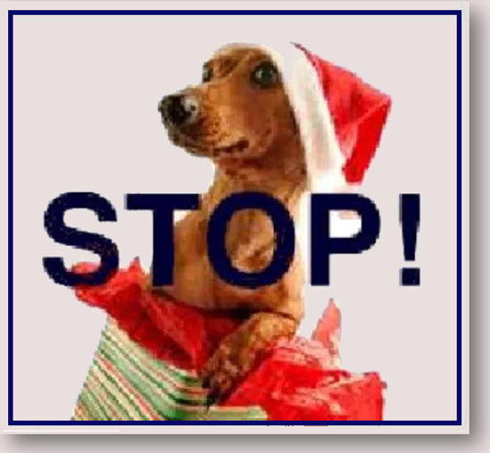 Don't Buy a Puppy for Christmas - Headin