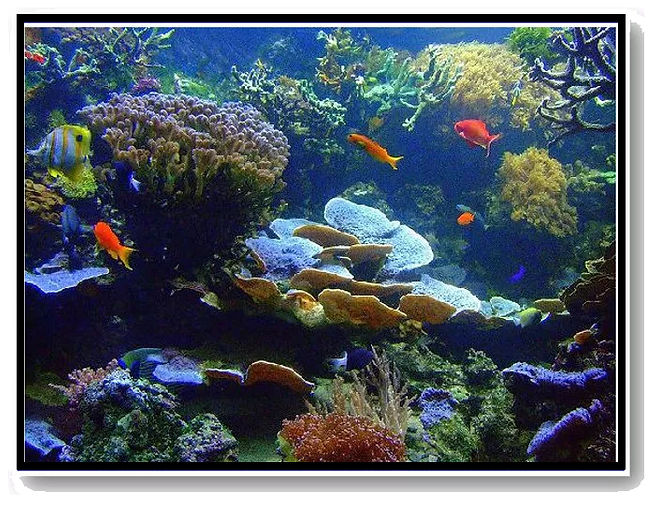 Far From Our Coral Home - white.jpg