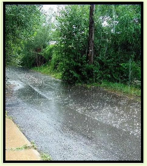 Summer Shower.jpg