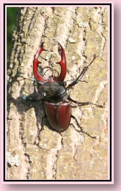 Beetle Sense.jpg