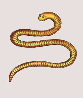 Wiggly Squiggly Worm .jpg
