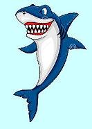shark .jpg