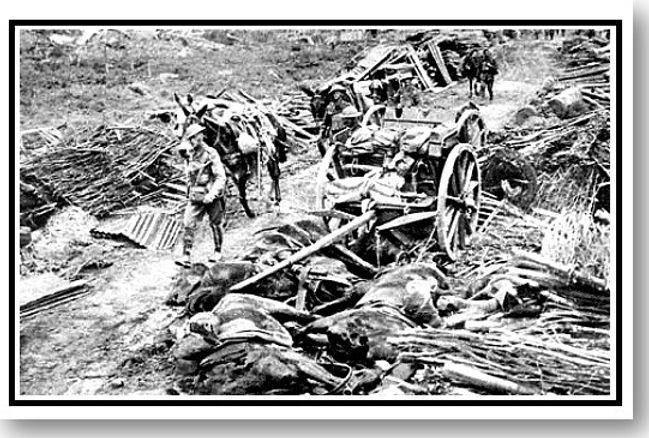 Flanders Killing Fields (The).jpg