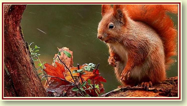Squirrel .jpg