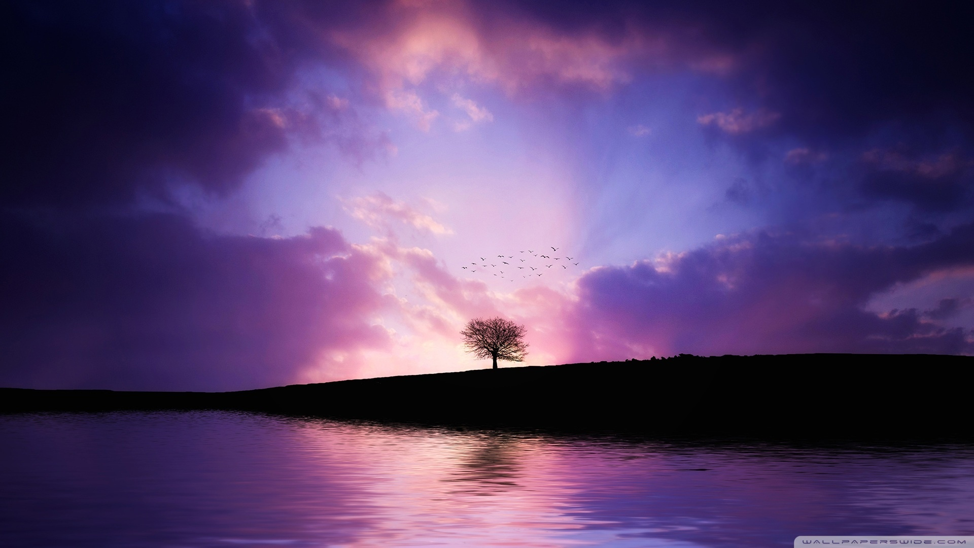 tree_sunset-wallpaper-1920x1080