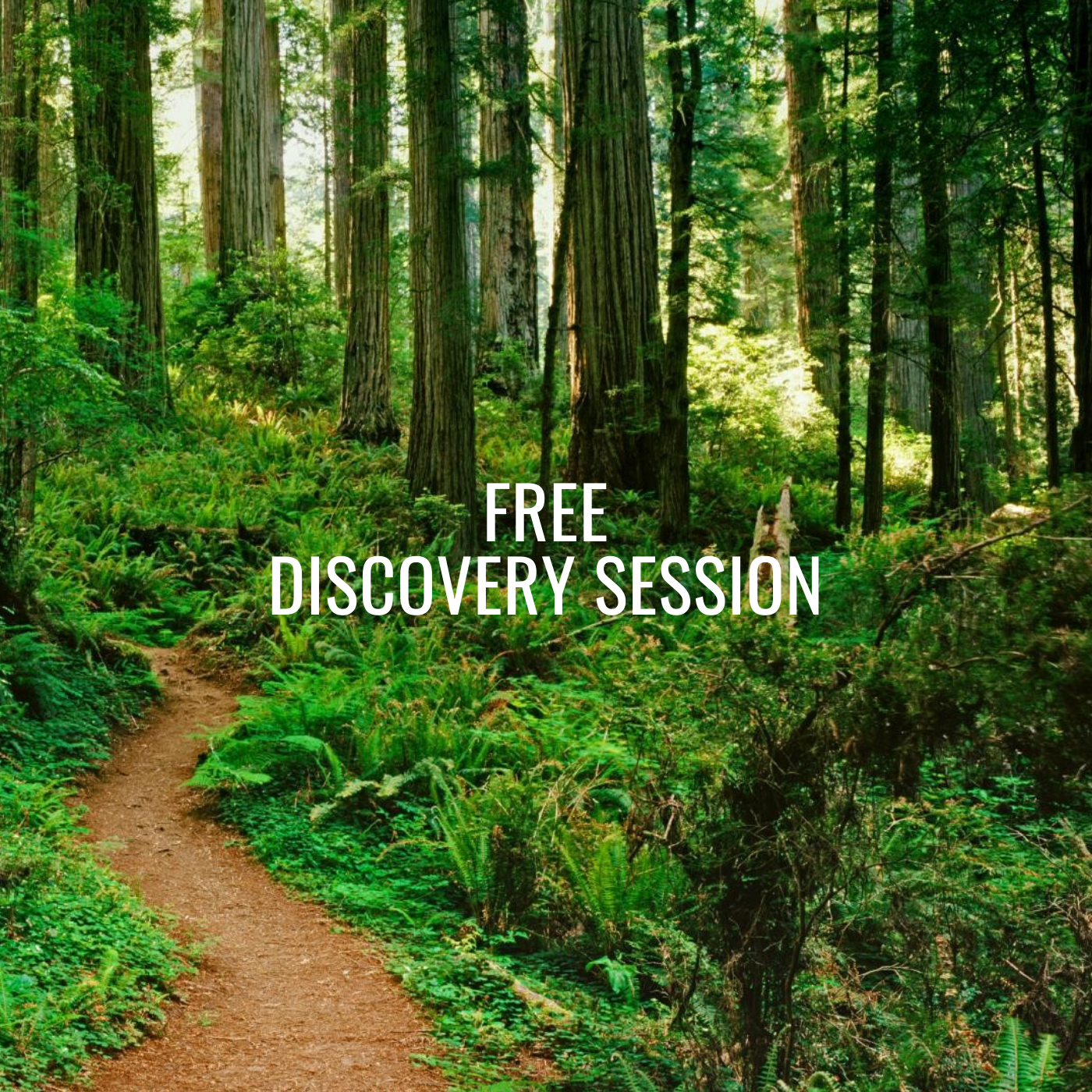 1 Hour FREE Discovery Session