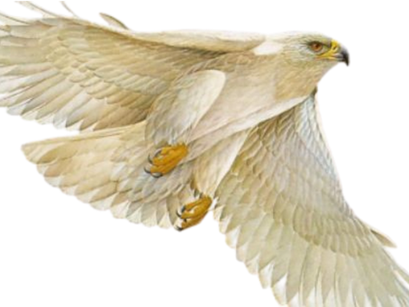 Why the White Eagle?