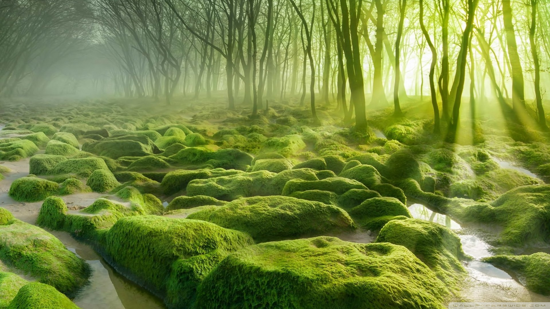 green_forest_2-wallpaper-1920x1080