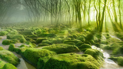 green_forest_2-wallpaper-1920x1080