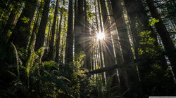 redwoods_2-wallpaper-2560x1440