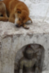 dog-1736541_640.jpg