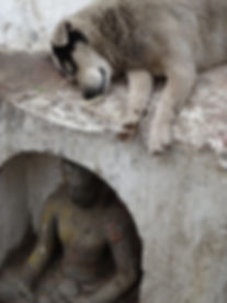 dog-1736540_640.jpg