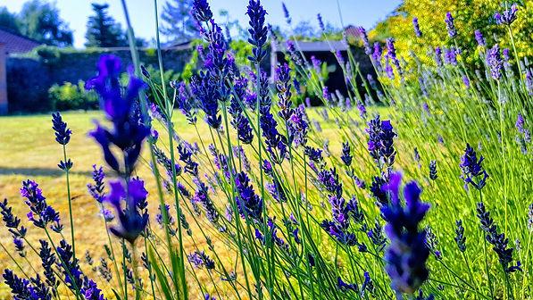 abbeyfield garden