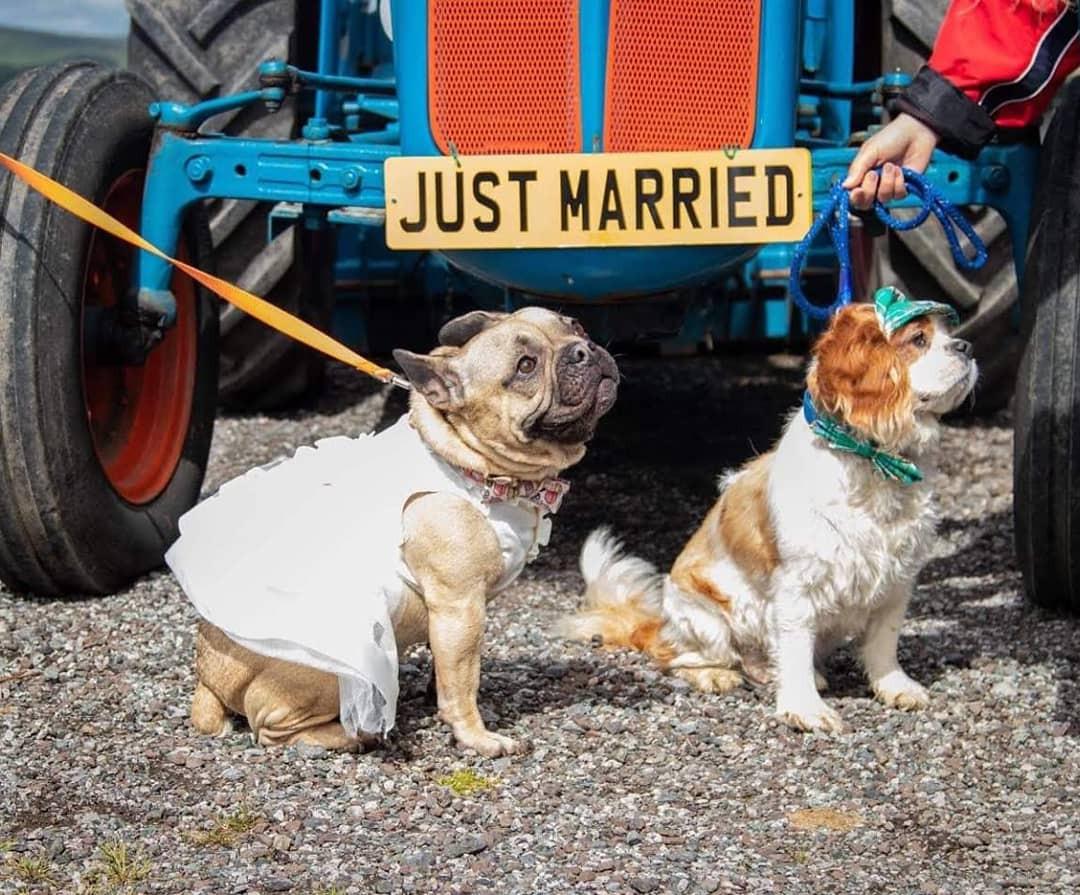A doggy wedding