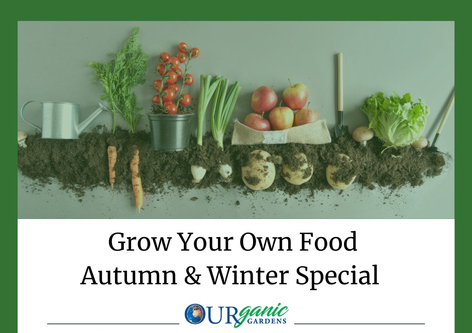 Join_us_for_a_special_autumn_and_winter_