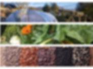 Photo only of Autumn Garden Course.jpg