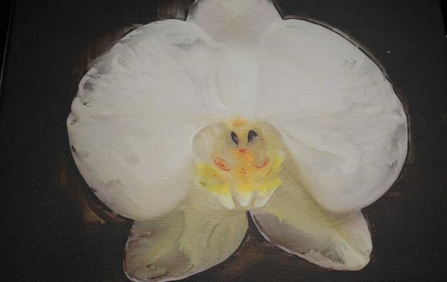 White Orchid Flower on Black 20x20