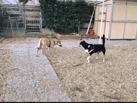 Cani e cani