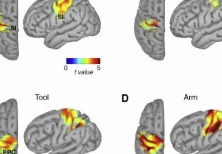 Il cervello estende la percezione del corpo agli strumenti che teniamo in mano, cosa c'entra i cani?