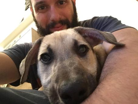 Per quale motivo vuoi (hai voluto) adottare un cane?