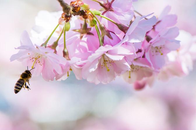 Liečba stravou v jarnom období