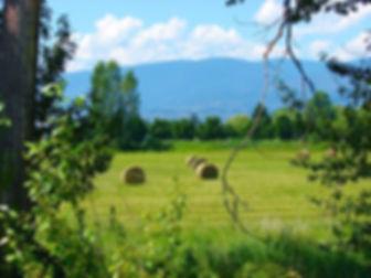 field-334172_960_720.jpg