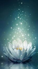 flor de lotus.jpg