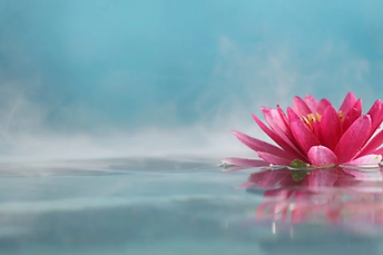 flor-de-lotus-significado-e-simbolismo-da-flor-sagrada_1495722386-960x640.webp