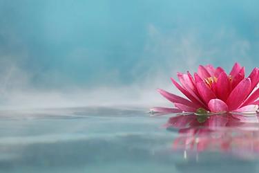 flor-de-lotus-significado-e-simbolismo-d