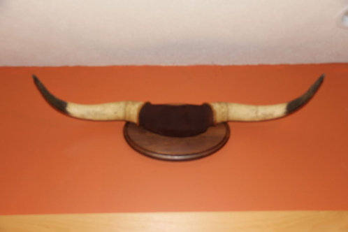 Texas Longhorn Mount: Dusty (Horns Only)