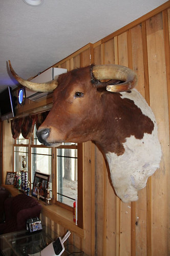 Texas Longhorn Mount: Hook-Horn