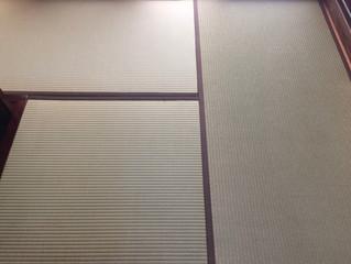 表替え 熊本産  大和撫子表