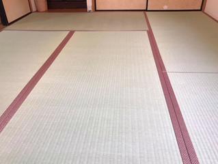 表替え / 熊本産畳表「涼風」綿々畳表