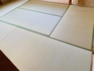 新畳 / 熊本産畳表「涼風」(経糸:綿々)