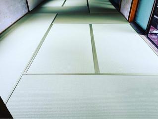 新畳 / ダイケン銀白 銀白色