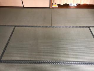 新畳 / 熊本県産男前表