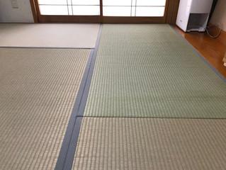 表替え / 熊本県産畳表 裏返し