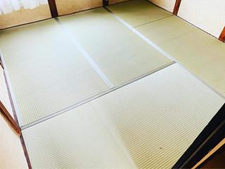 新畳 / 熊本産畳表「涼風」男前表(経糸:麻綿、本間一番草)