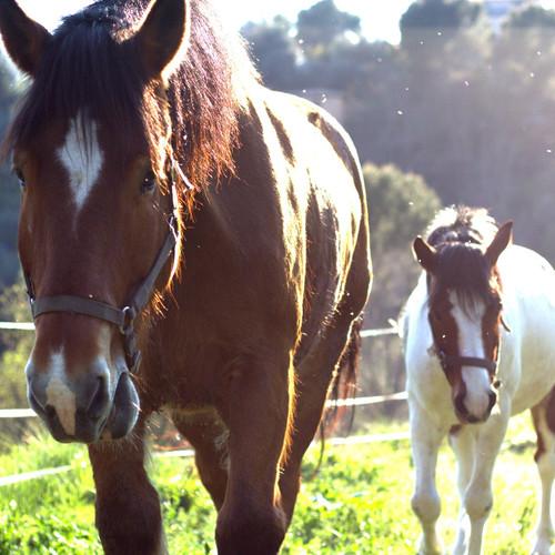 chevaux jardins.jpg